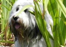 filova vegetarische hond banner