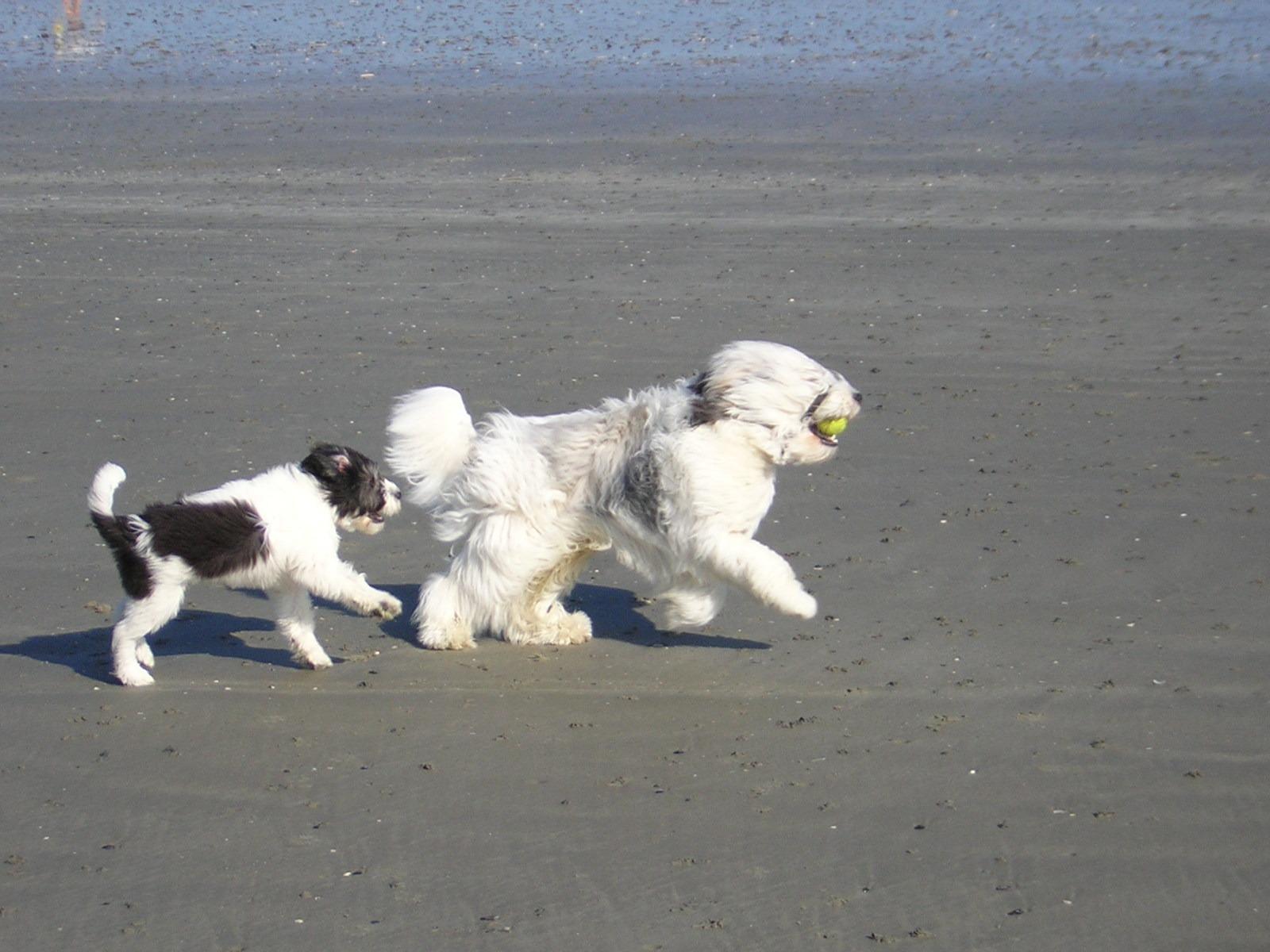 Pup op het strand