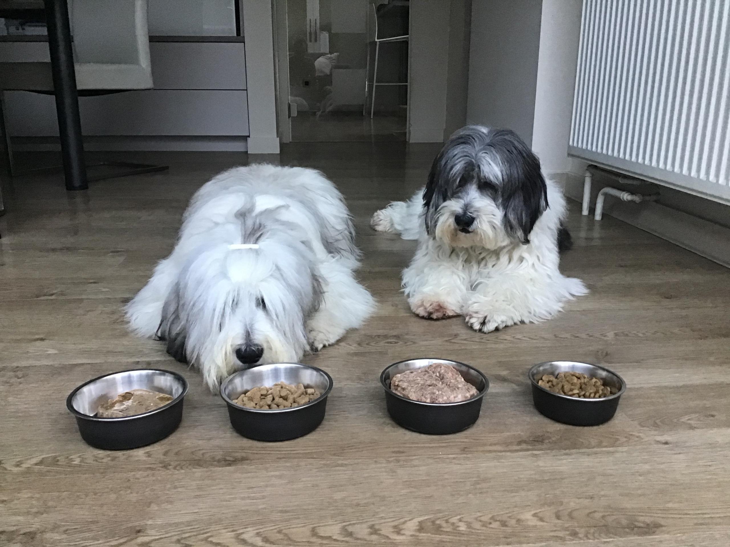Voedingsadvies honden fides en lova