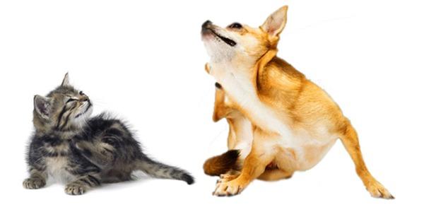 vlooien teken honden katten