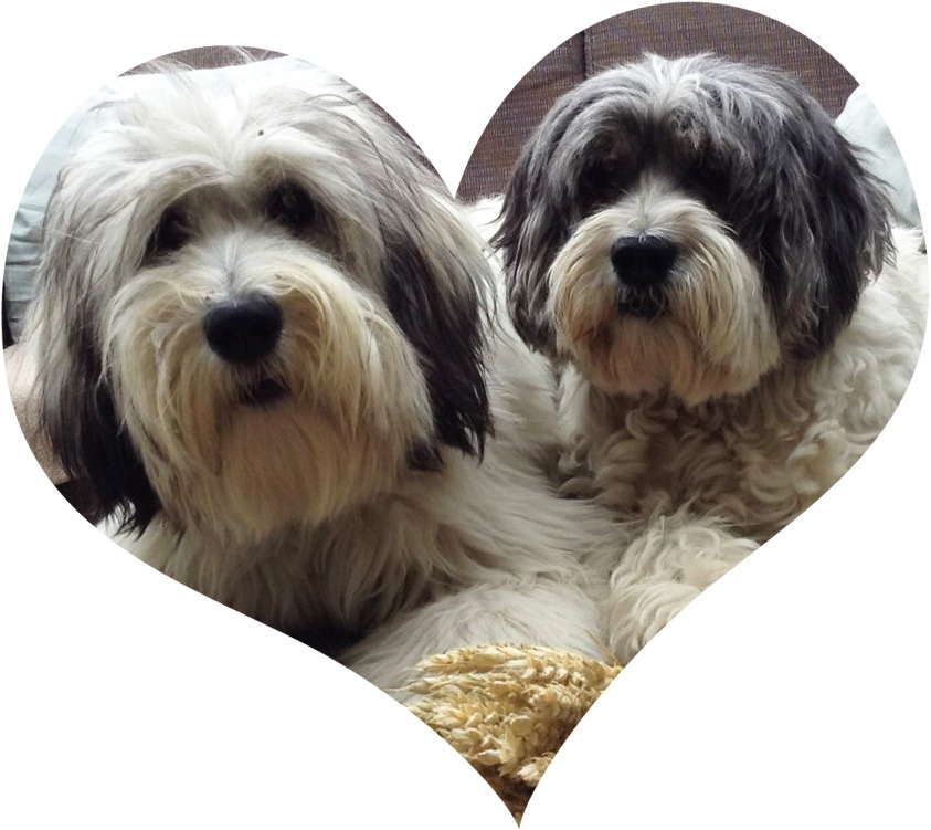 filova honden hartje