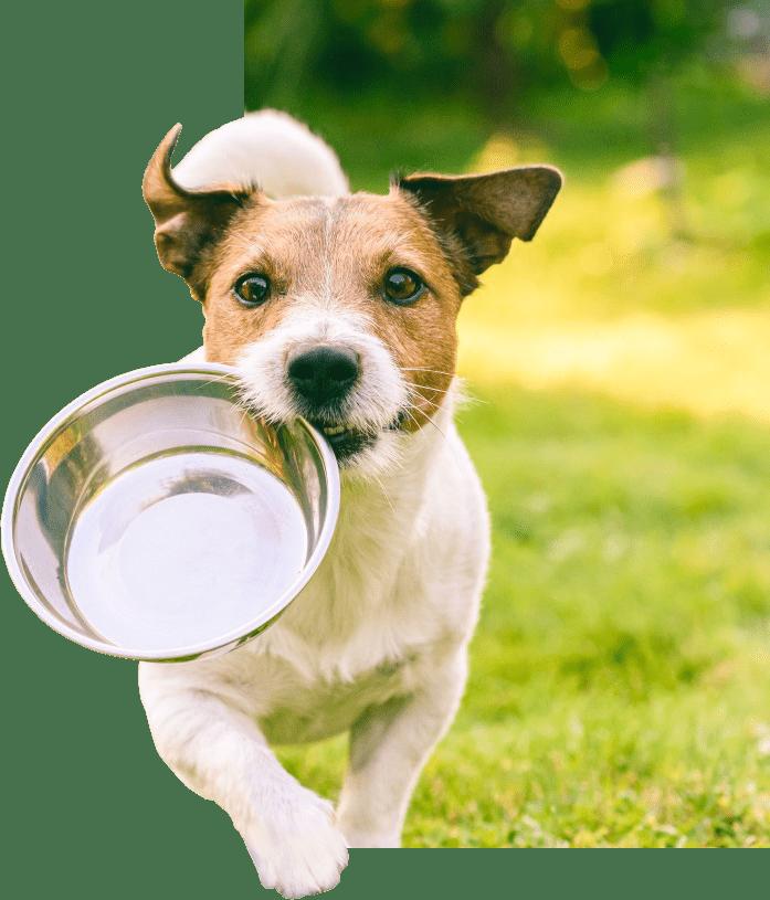 filova hondje uitgesneden poot