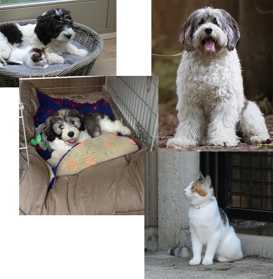 filova katten en honden