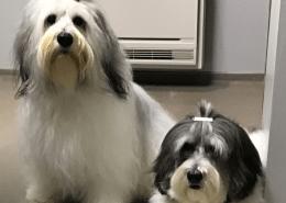 Filova twee honden bij de hondenkapper banner vachtverzorging