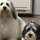Filova professioneel vachtadvies voor jouw hond