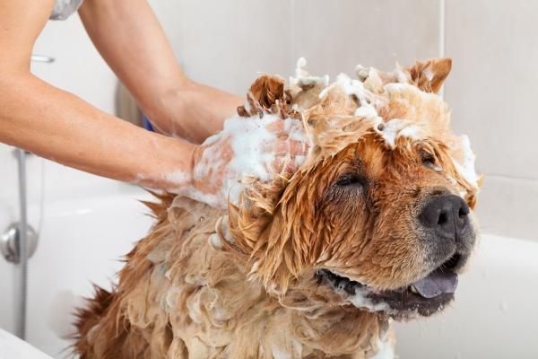 Filova honden wassen zero waste met Savonke dogshampoo
