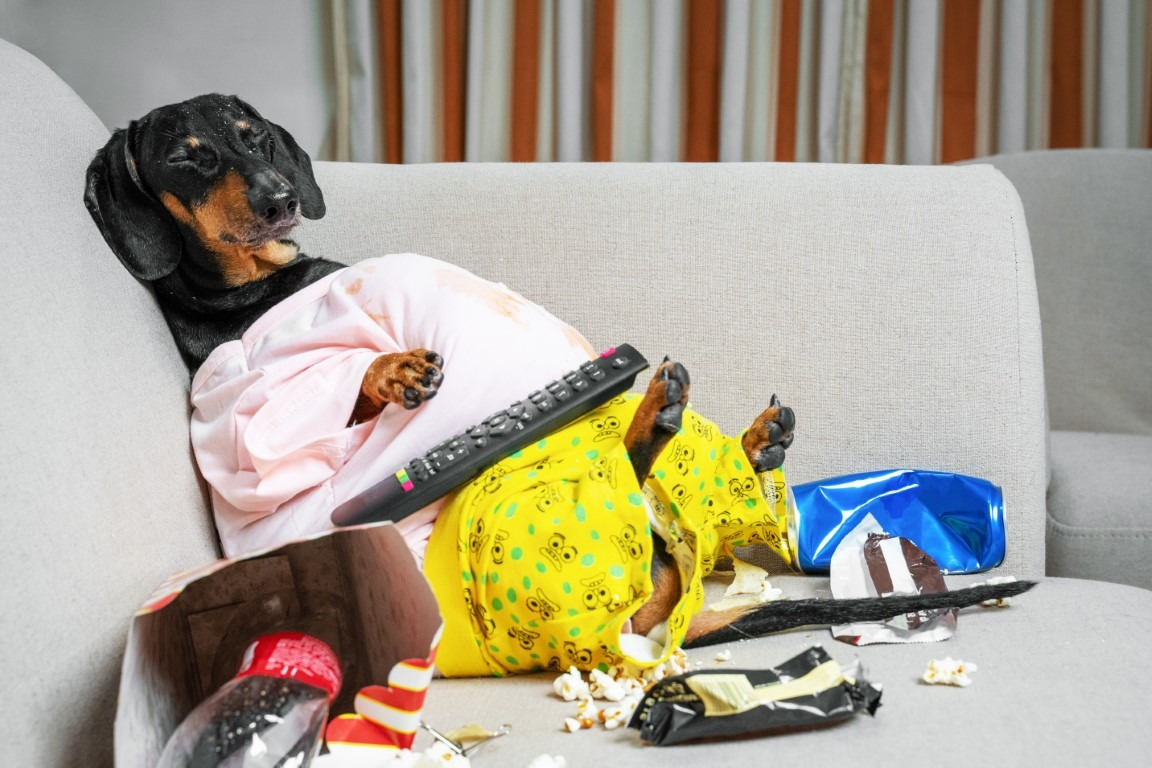 Filova afbeelding middel hondje grappig zetel