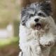 Filova hondenspeciaalzaak 5 tips voor een ecologische levensstijl met jouw huisdier