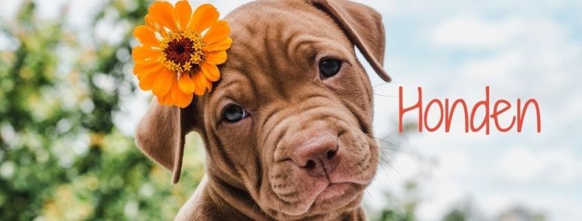 Hondenspeciaalzaak Filova biologische voedingen