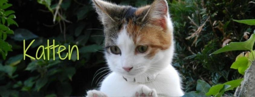 Kattenspeciaalzaak Filova Heist-op-den-Berg