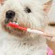 Filova voedingsadvies tanden poetsen bij honden