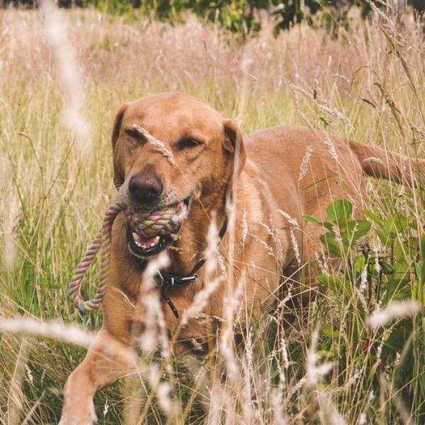 Filova hondenplezier Hennep speelbal met handvat