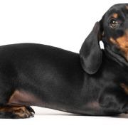 Filova - De hond en de maag