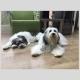 Filova voedingsadvies honden - Vegetarisch koken voor de hond